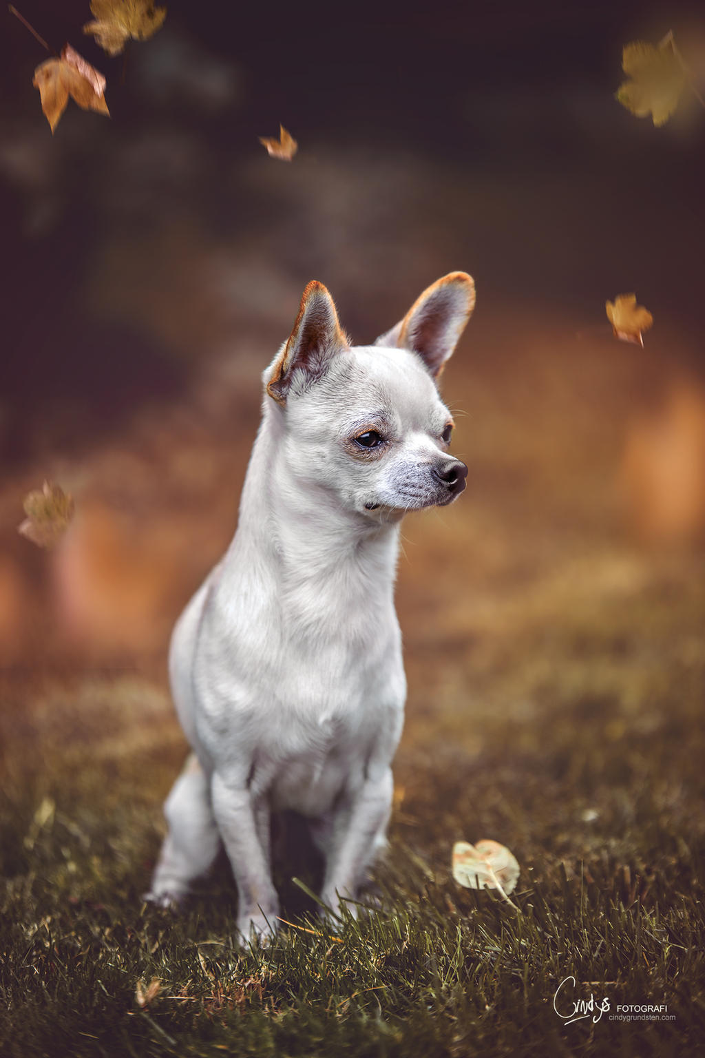 My little guy by CindysArt