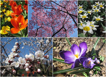 In bloom. by Elphaba-Skellington