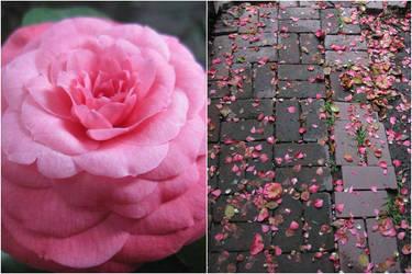 My Rosy Cheeks. by Elphaba-Skellington