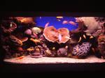 Life Aquatic in Wide Screen. by Elphaba-Skellington