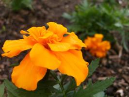 Orange by MarkFinn