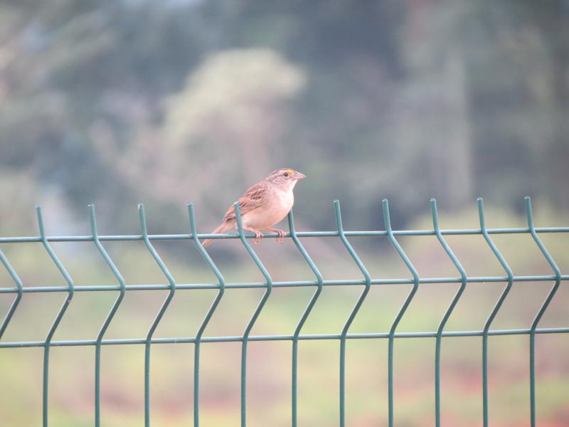 Little bird by AnaTaffy