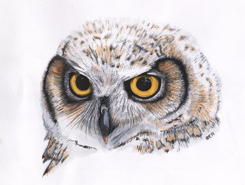 Owl2 by tusindfryd
