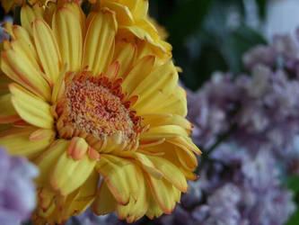 Flower by zielonapietruszka