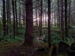 Dakoada in the woods.