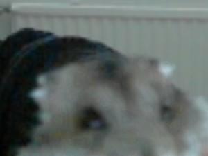 iKattima's Profile Picture