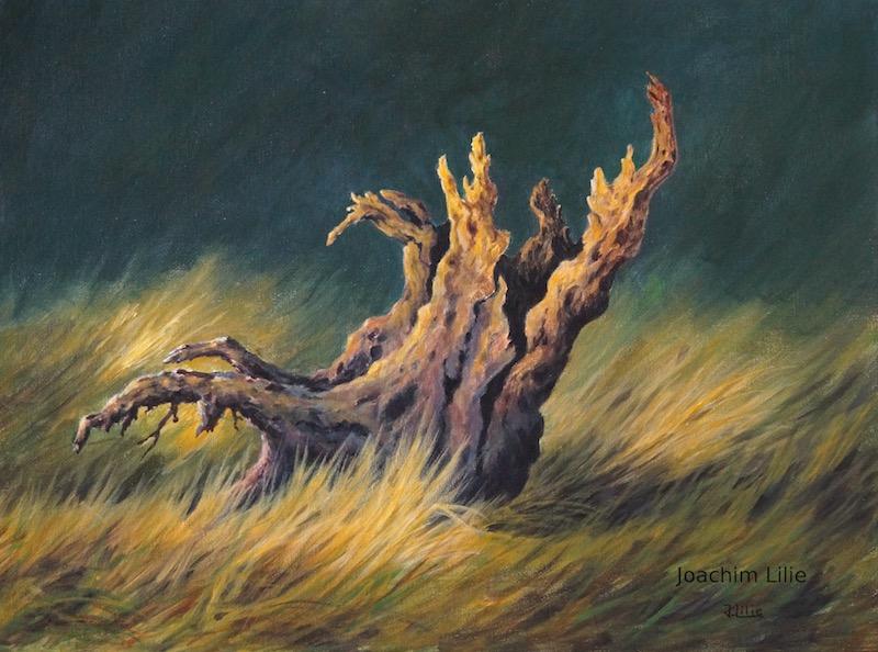 Tree stump by JoachimL