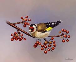 Goldfinch by JuliaChu
