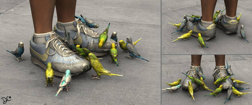Parakeets and Shoes: Other Views by TempestWorks