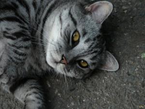 MascaraTheCat's Profile Picture