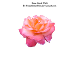 Rose stock PNG