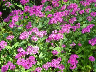 Wildflowers, Glowing Purple by mycalsee