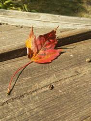 I Heard it('s) Fall (Img 20170917) by mycalsee