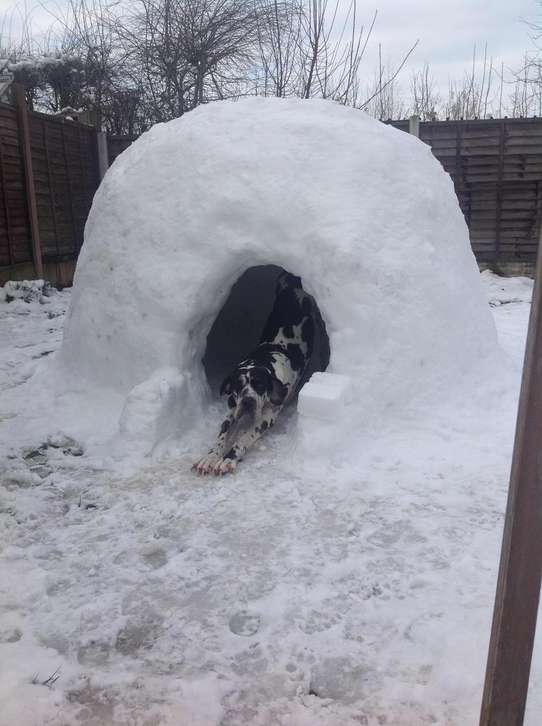 Why Igloo Dog House