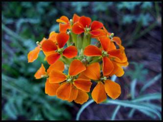 Fiery Orange by sorrowsworn-demon