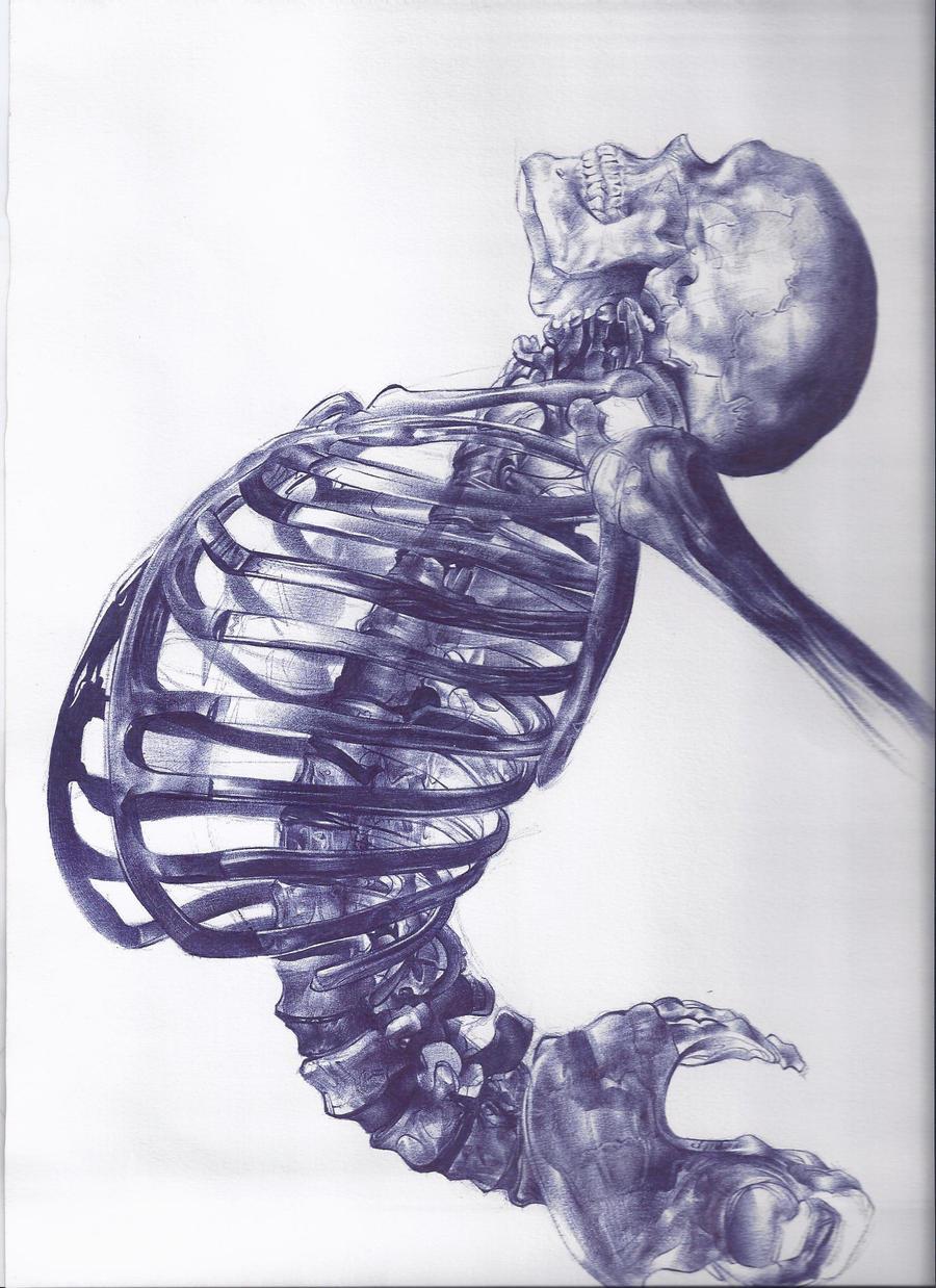 Scheletro umano by AndreaSchillaci