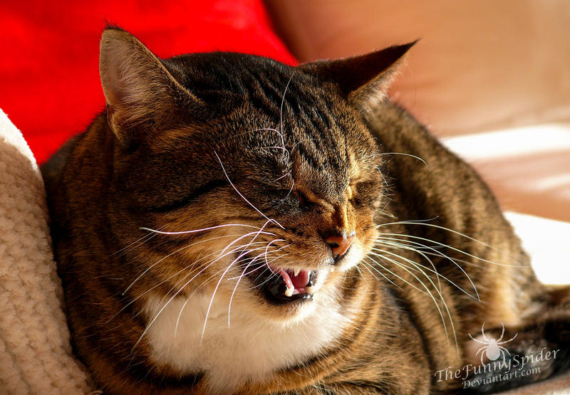 Fiona - The laughing cat by TheFunnySpider