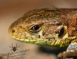 Sand Lizard - Portait by TheFunnySpider