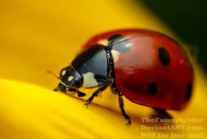 Seven-spot Ladybird - Coccinella septempunctata by TheFunnySpider