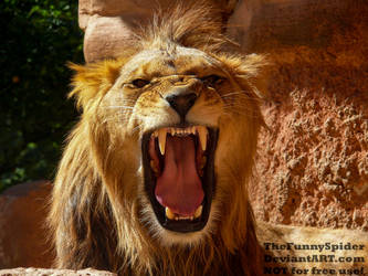 Hear me ROAR!! by TheFunnySpider