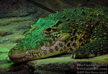 Cuban Crocodile - Crocodylus rhombifer by TheFunnySpider
