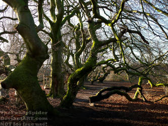 Crooked Trees - Germany January 2018 by TheFunnySpider