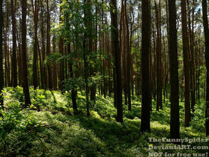 Beautiful German Forest - May 2018 by TheFunnySpider