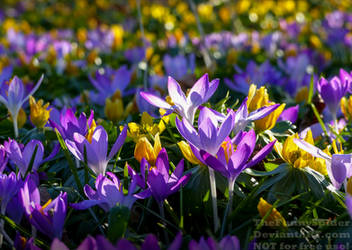 A symphony of yellow and purple by TheFunnySpider