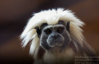 Cute cotton top Tamarin by TheFunnySpider