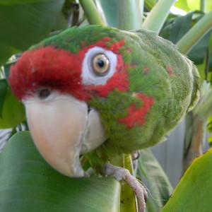 Unoko412's Profile Picture