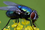 1056 Colorful fly