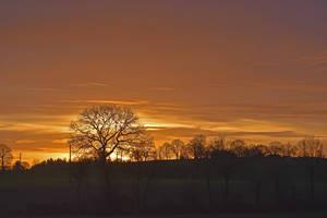 3515 Sunrise of Christmas by RealMantis