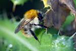 1748 Bumblebee