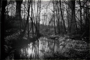 4448 The river in black and white by RealMantis