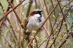 5555 Sparrow