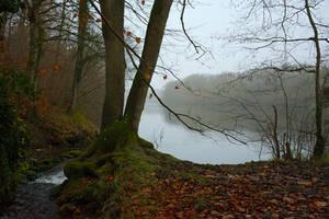 0225 Autumn scene by RealMantis
