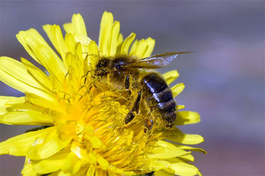 7197 Bath of pollen by RealMantis