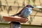 6290 Sparrow