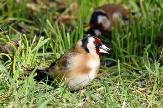 4744 Goldfinch
