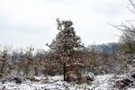 6001 Snowscape