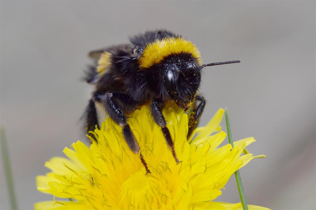 7498 Bumblebee by RealMantis