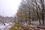 5996 Snowscape