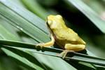 0440 Little frog