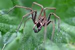 0128 Spider