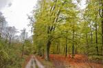 1354 Colors of Autumn