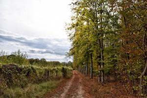1352 Colors of autumn by RealMantis