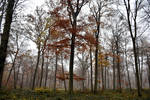 2131 Colors of autumn IX