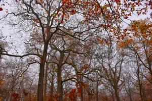 1953 Colors of autumn by RealMantis