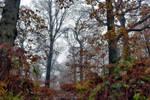2008 Colors of autumn