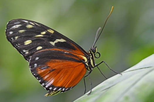 0086 Butterfly